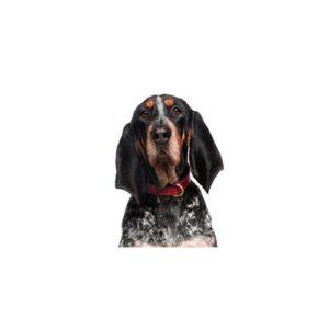 Pet City Houston Bluetick Coonhound