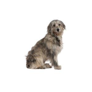 Pet City Houston Irish Wolfhound