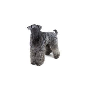 Pet City Houston Kerry Blue Terrier