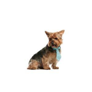 Pet City Houston Norwich Terrier
