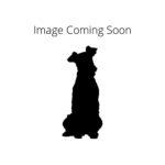 Pet City Houston Redbone Coonhound